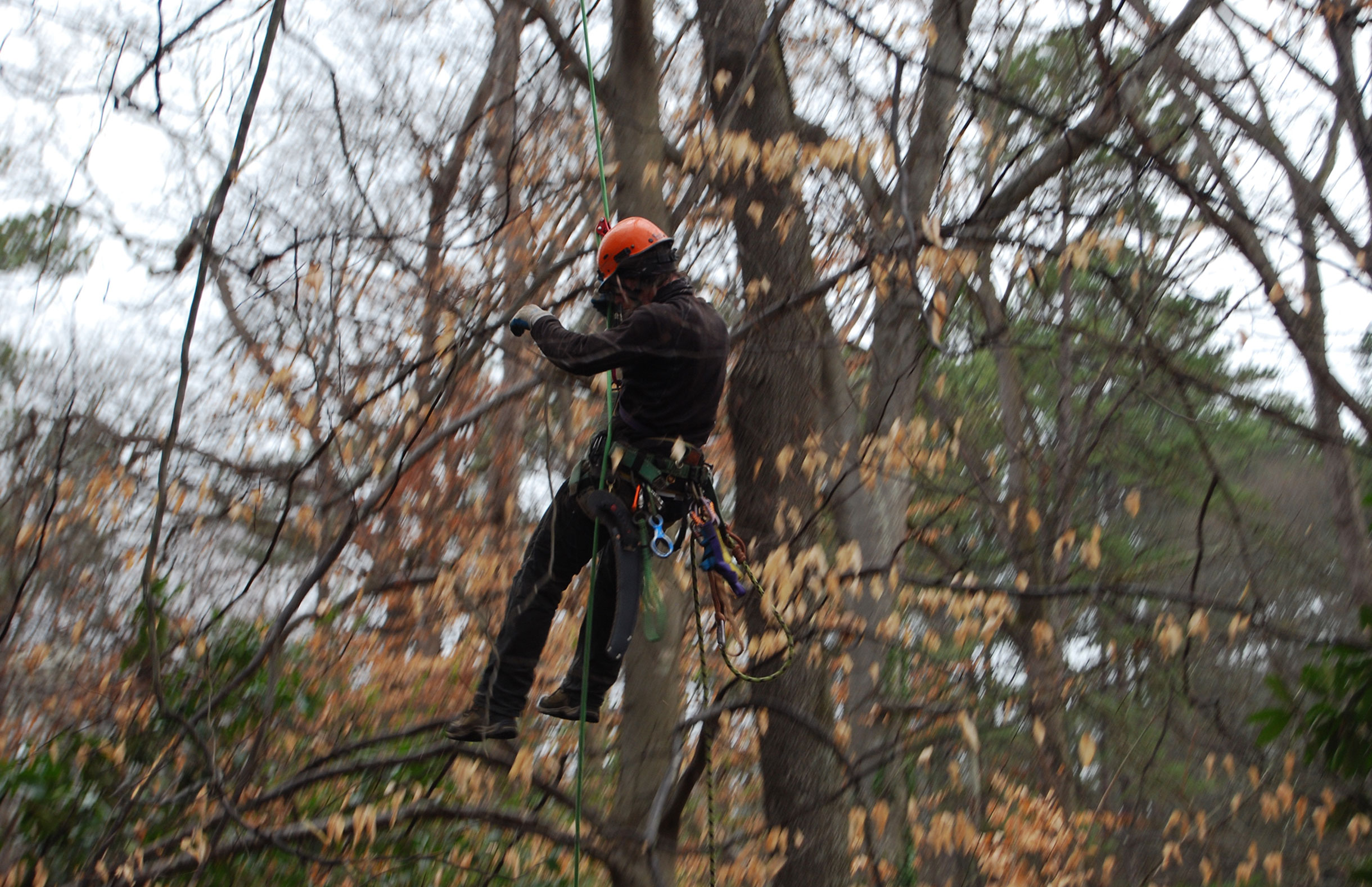 Appleseed Tree Service